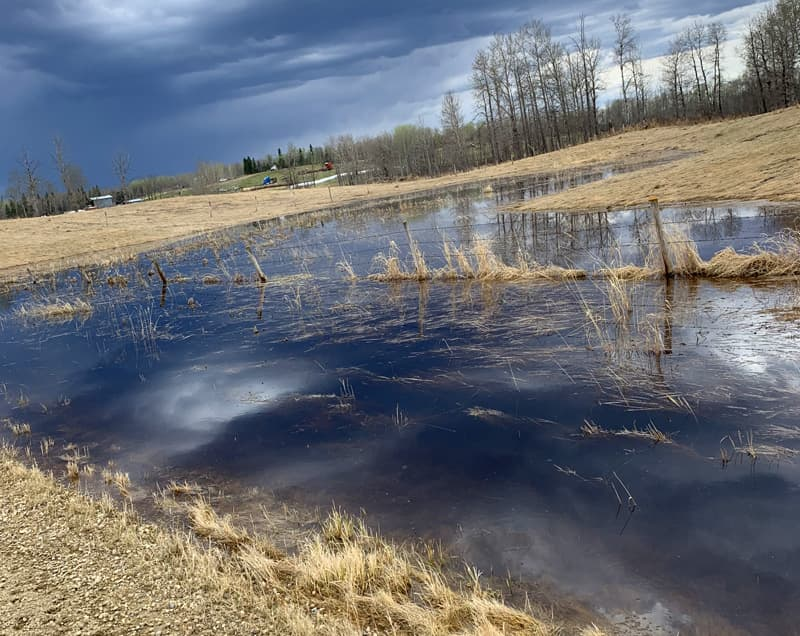 Beaver dams cause extensive flooding of land and infrastructure.